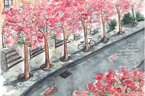 Dessin_du_Vendredi-cherryblossom_KaroPauwels_illustration_130415